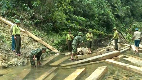 Ai gây nên tội phá rừng?