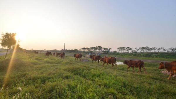 """Nếu chăn thả trâu bò còn """"đóng thuế"""" thì có khi hít thở không khí cũng phải… mất tiền!"""