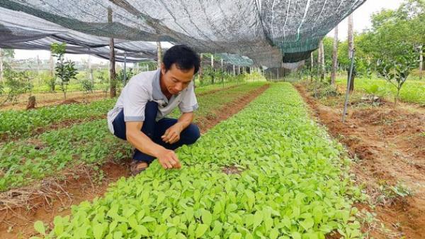 Từ bỏ học bổng tiến sĩ về quê trồng rau sạch
