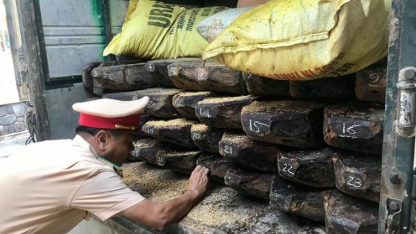 Tạm giữ xe ô tô biển số Quảng Bình chở khối lượng lớn gỗ sến quý không rõ nguồn gốc