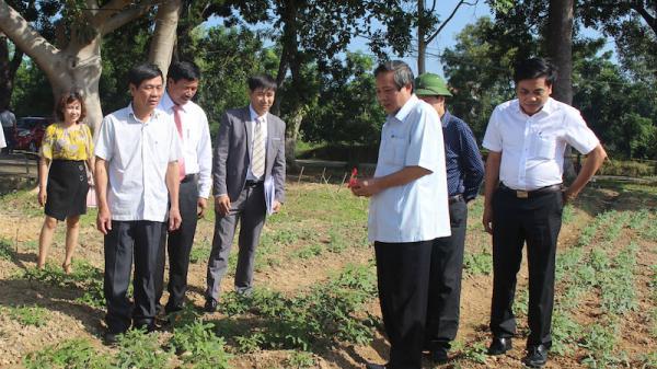 Đồng chí Bí thư Tỉnh uỷ kiểm tra các mô hình sản xuất nông nghiệp công nghệ cao