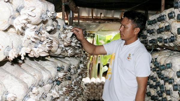 Từ bỏ công việc ổn định về Quảng Bình làm giàu, mỗi ngày thu tiền triệu từ trồng nấm