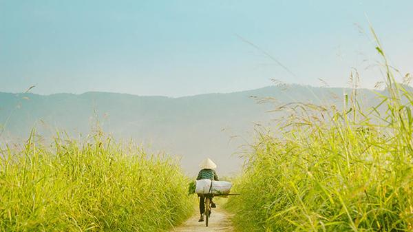 Ở Quảng Bình có một đồng cỏ lau xanh mướt đẹp quên lối về