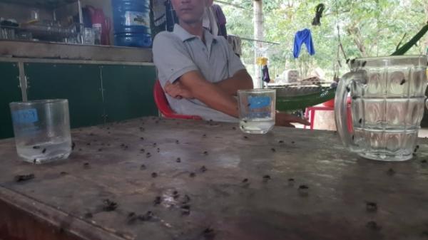 Vụ người dân khốn khổ vì ruồi nhặng ở Bố Trạch (Quảng Bình): Công ty Hòa Phát thừa nhận đổ phân tươi ra môi trường