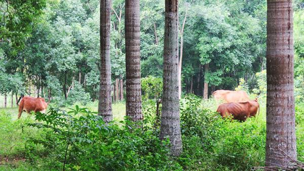 Đồng Hới: Vì sao việc đầu tư xây dựng công viên Đồng Sơn bị dở dang?