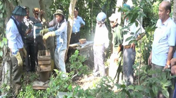Người dân Bố Trạch thu nhập hơn 1,5 tỷ đồng từ mô hình nuôi ong lấy mật