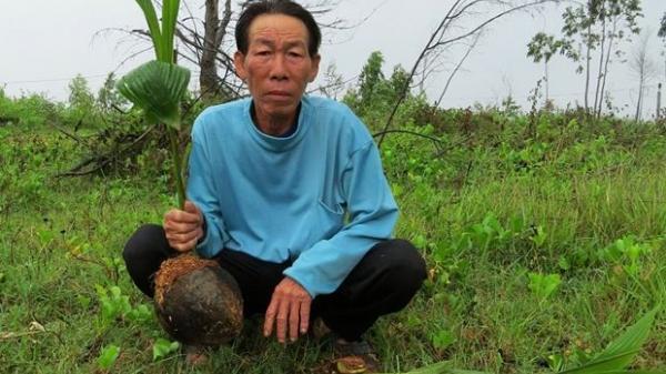 Quảng Bình: Nghi án ch.ặt ph.á 300 gốc cây dừa, h.ành h.ung người để tranh gi.ành đất