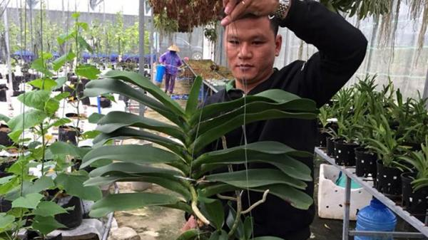 Quảng Bình: Làm giàu từ đam mê trồng hoa lan