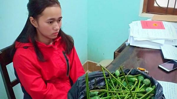 Quảng Bình: Mua bán quả a,nh t,úc tươi qua Facebook, cả vợ lẫn chồng bị c,ông an 'hỏi thăm'