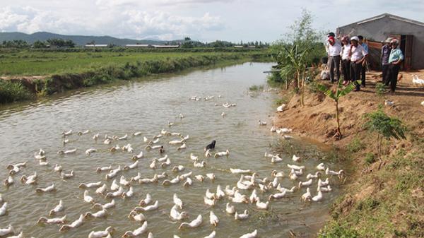 Bố Trạch: Khi kinh tế trang trại tăng tốc