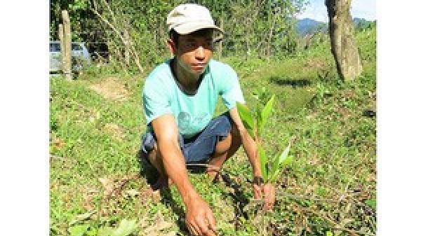 """Quảng Bình: Phát hơn 15.000 cây giống """"đểu"""" cho dân nghèo trồng rừng"""