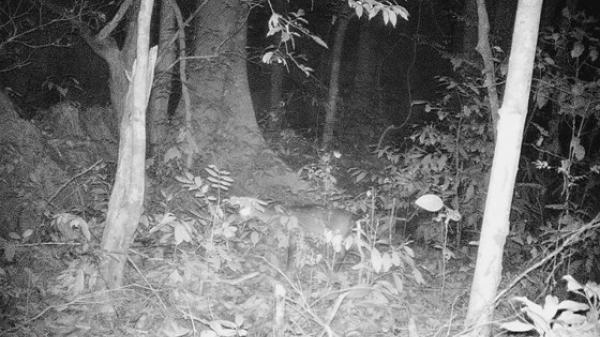 Quảng Bình: Bất ngờ xuất hiện động vật vô cùng quý hiếm nguy cơ tuyệt chủng