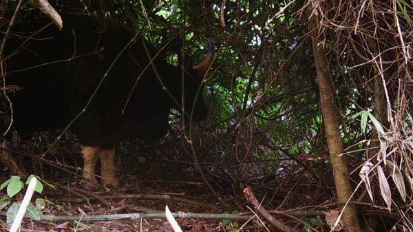 Phát hiện hàng chục cá thể động vật quý hiếm trong khu vực Phong Nha-Kẻ Bàng