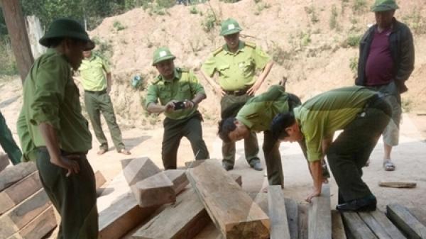 X ử lý nghiêm vụ ph á rừng thuộc Vườn quốc gia Phong Nha Kẻ Bàng