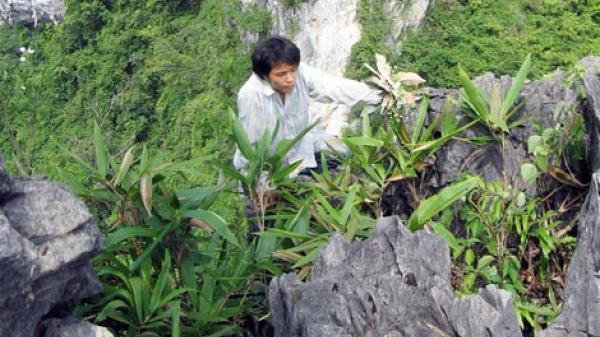 Ngăn chặn tình trạng khai thác phong lan trái phép tại Vườn Quốc gia Phong Nha - Kẻ Bàng