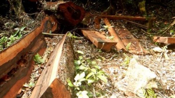 Phong Nha - Kẻ Bàng: Rừng bị phá nhiều hơn báo cáo ban đầu
