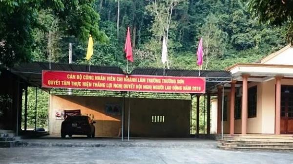 Thêm một vụ phá rừng trái phép để lấy gỗ lim tại Quảng Bình
