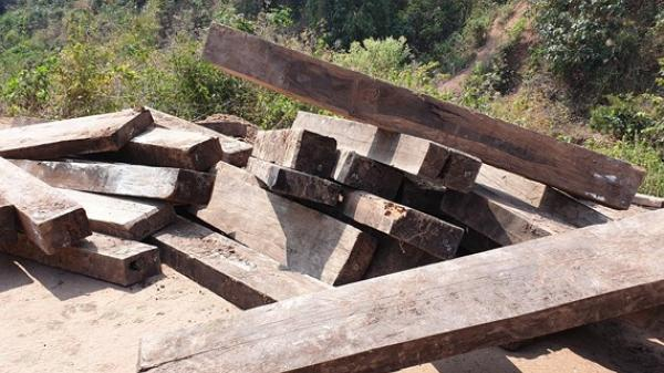 Quảng Bình: Phát hiện 3 hầm gỗ mun khủng ở biên giới Thượng Trạch