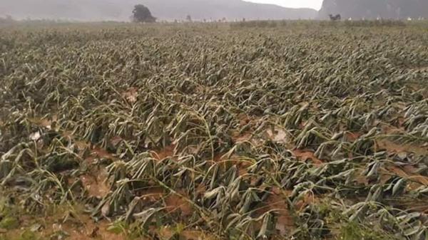 Bố Trạch: L ốc xoáy gây thiệt h ại nặng nề về nhà cửa, tài sản và cây trồng của nhân dân trên địa bàn