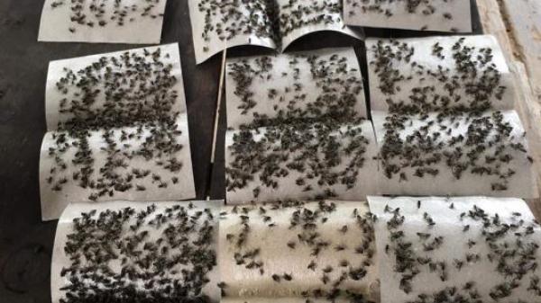 Huyện Bố Trạch – Quảng Bình: Ai cứu người dân thoát cảnh sống chung với ruồi?