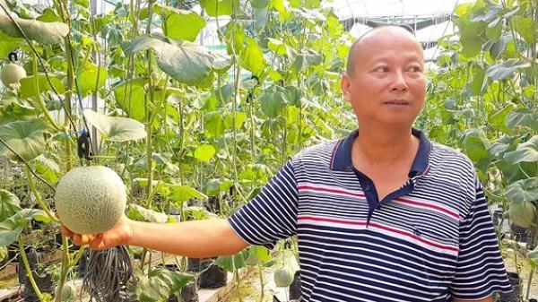 Quảng Bình: Làm nông kiểu mới lãi 1 triệu đồng/m²