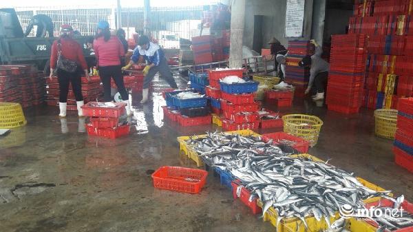 Quảng Bình: Đã chi trả hơn 90% tiền bồi thường sự cố môi trường biển