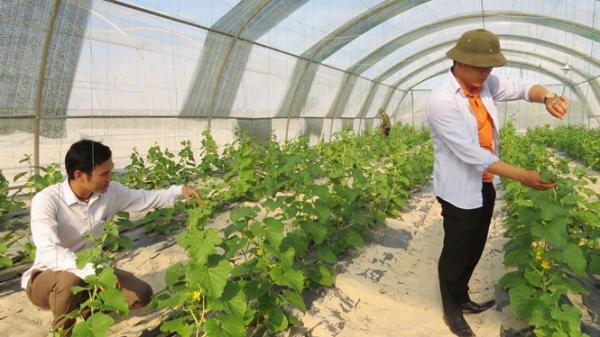 Hai anh em thạc sỹ làm nông nghiệp sạch trên 5ha đất cát ở Quảng Bình