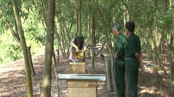 Tận dụng lợi thế đồi rừng, người dân xã Mai Thủy làm giàu từ mô hình nuôi ong lấy mật