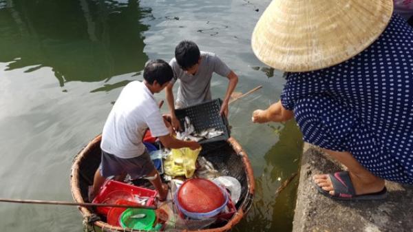 Trúng mẻ cá mòi 5 tạ trên sông Nhật Lệ