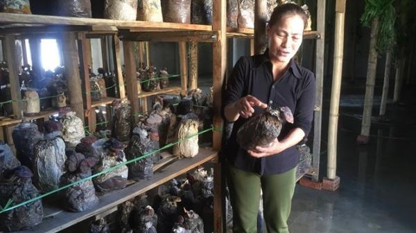 Quảng Ninh (Quảng Bình): Chú trọng phát triển mô hình kinh tế điểm giúp phụ nữ thoát nghèo