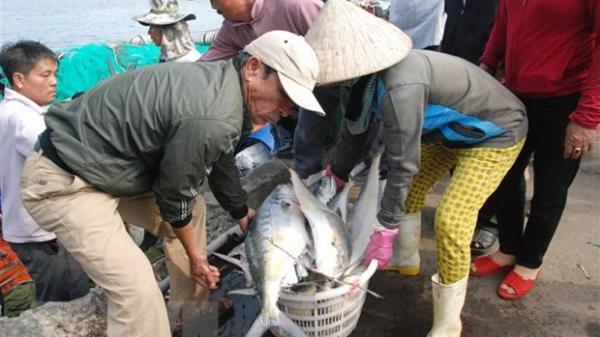 Ngư dân Quảng Bình trúng lộc biển đầu năm mới