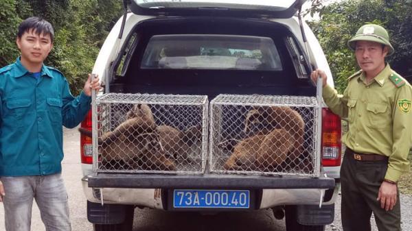 Quảng Bình: Thả động vật nguy cấp, quý hiếm về môi trường tự nhiên
