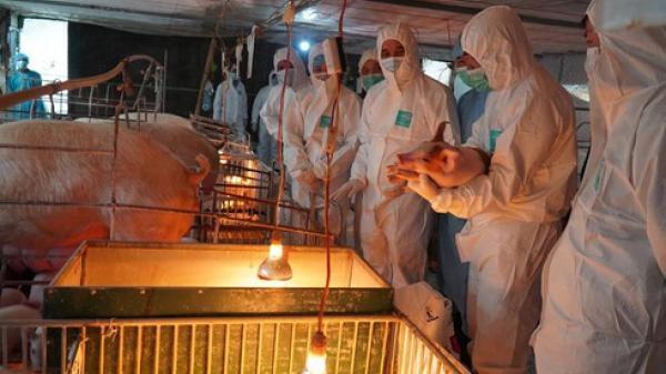 Thủ tướng yêu cầu sớm giảm giá thịt lợn