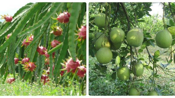 Độc đáo những khu vườn kiểu mẫu ở huyện Lệ Thủy