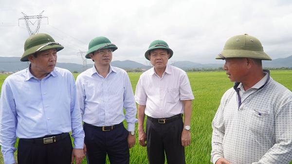 """Giấc mơ """"gạo không hóa chất"""" của người đàn ông Quảng Bình"""