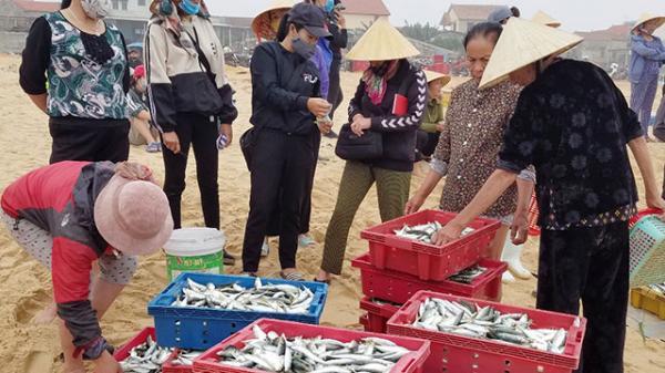 Ngư dân bãi ngang Quảng Bình có thu nhập cao nhờ trúng mùa hải sản