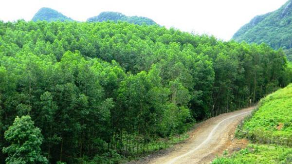 Tịch thu hơn 804m3 gỗ lậu