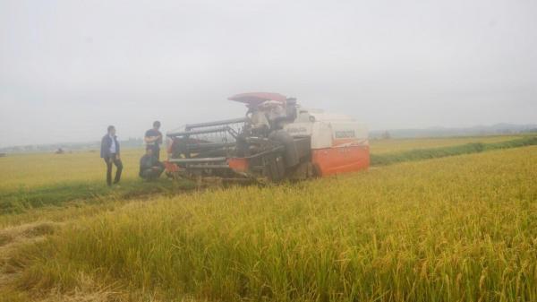 Công an huyện Quảng Trạch b.ắt giữ đối tượng có hành vi c.ư.ớ.p tài sản của người dân trong mùa gặt.