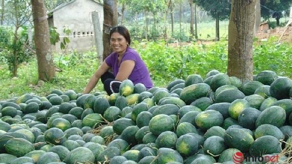 Nụ cười của người dân Quảng Bình khi dưa hấu vừa được mùa lại được giá