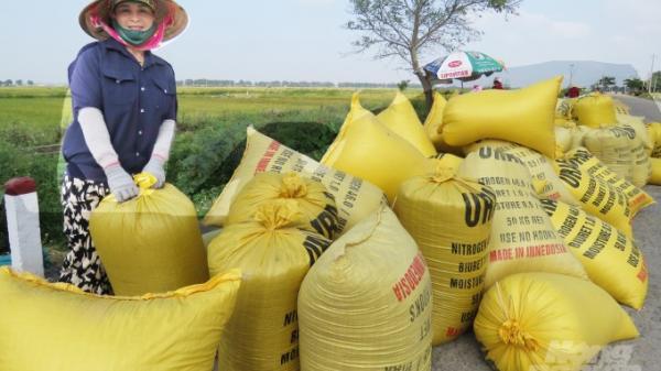 Nông dân Lệ Thủy phấn khởi được vụ mùa bội thu và lúa bán chạy