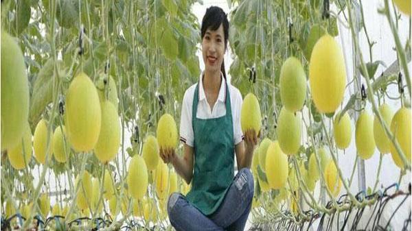 Lan tỏa phong trào phụ nữ Quảng Bình khởi nghiệp, vươn lên làm giàu