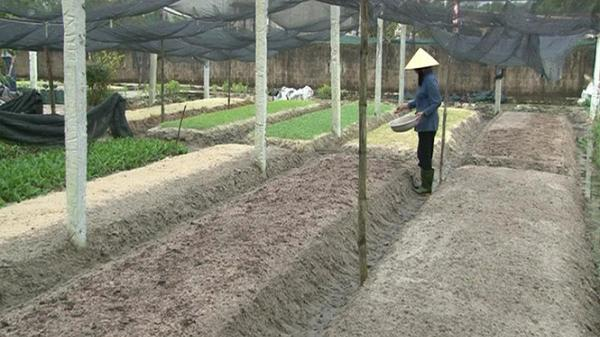 Quyết tâm... trồng rau sạch