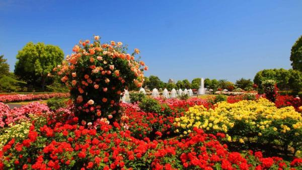 Lễ hội Hoa quốc tế 100 triệu USD sẽ nâng tầm ngành du lịch Quảng Bình trên bản đồ thế giới