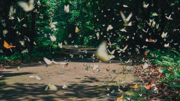 Quảng Bình: Bươm bướm bay rợp trời trên khúc đường trekking từ Hang Én tới Sơn Đoòng