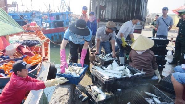 Công bố mở cảng cá Sông Gianh và Nhật Lệ