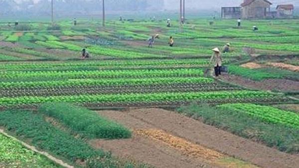 Từ ngày 01/01/2021: Chính thức miễn thuế sử dụng đất nông nghiệp thêm 05 năm