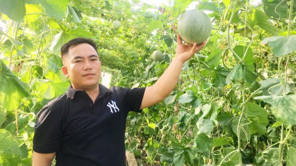 """8X Quảng Bình bỏ làm cán bộ, về làng """"cắm"""" sổ đỏ, trồng dưa lưới, kiếm vài trăm triệu/năm"""