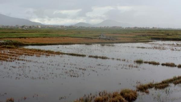 Quảng Bình: Hàng trăm ha đất lúa nhiễm mặn, dân cầu trời mưa