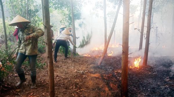 Cháy lớn tại rừng thông Vạn Trạch, Bố Trạch