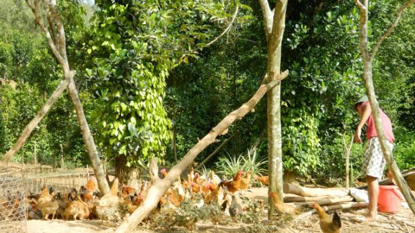 Thị xã Ba Đồn: Các mô hình kinh tế trang trại thu hút trên 300 lao động ở địa phương